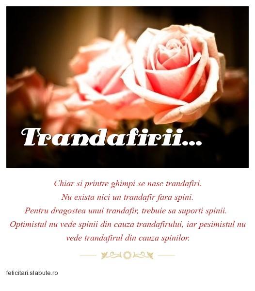 Poza felicitare Trandafirii...