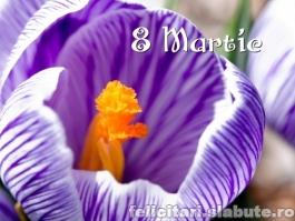 Poza 8 Martie